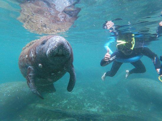 Manatee Snorkel Tour - Semi Private : It was amazing!!