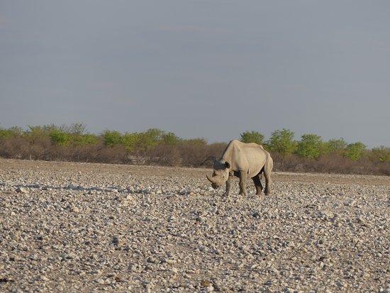 Don Tours & Safaris