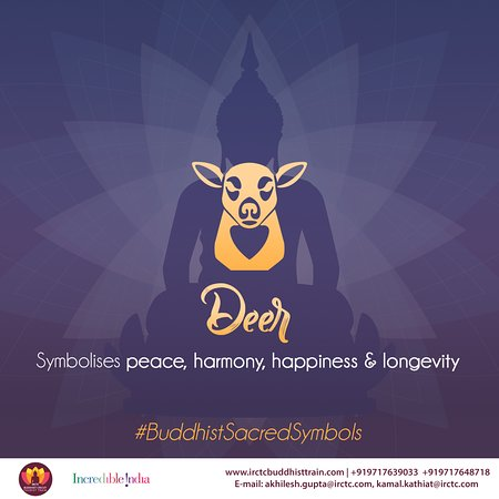 India: May the peace be with you. That's what deer symbolises in Buddhism. A scared animal with the spirit of gentleness & softness, it is said to be the personification of virtues, spiritual superiority & regeneration #BuddhistSacredSymbols