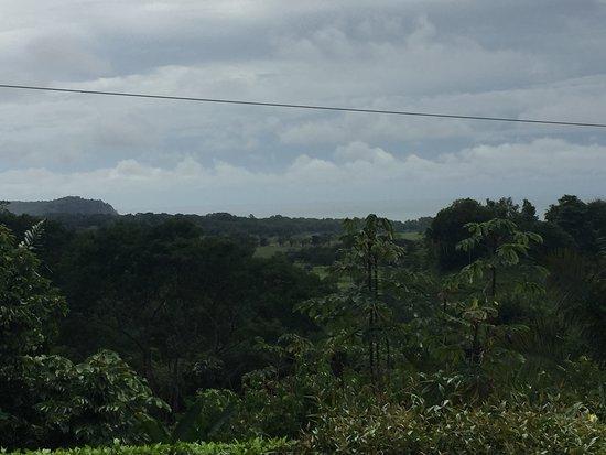 Bejuco Photo