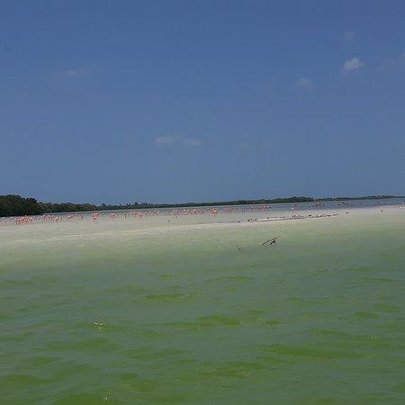 Holbox Island, Mexico: ISLA PASION un lugar hermoso para ver a los flamingos, convivir con las aves y caminar en su hermosa playa.
