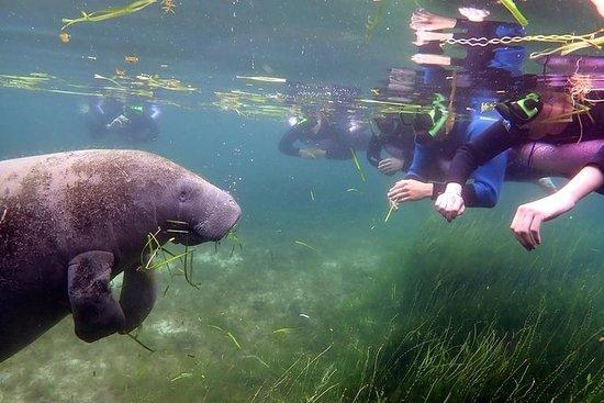 Nuotata con il lamantini nel fiume