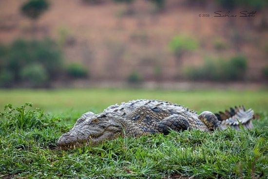 Chobe National Park照片