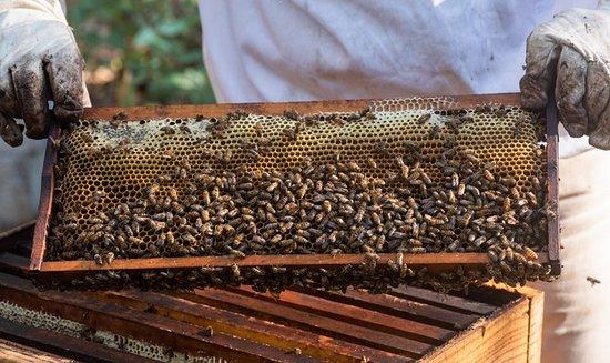 Etienne de Senneville, beekeeper