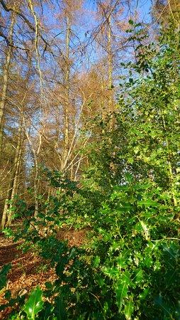 Montrose, UK : A walk in Rosemount Woods
