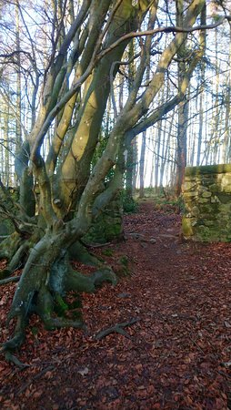 Montrose, UK: A walk in the Rosemount Woods