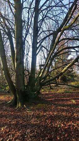 Montrose, UK : A walk in the Rosemount Woods