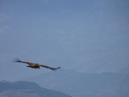 la rencontre avec un vautour