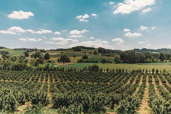 Portacomaro, Italy: La collina dei Fratelli Durando, dove rilassarsi dopo un pranzo in agriturismo, godere della vista, provare l'esperienza del laboratorio delle nocciole