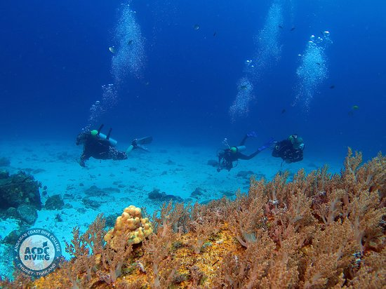 На острове Рача Ной  Дайв-центр на Пхукете ACDC Diving