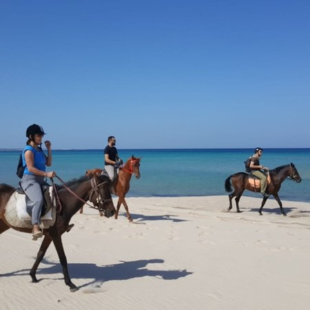 Horse riding Bizerte