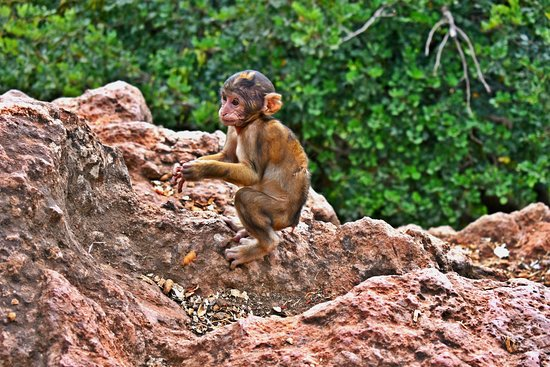 Ouzoud Falls Day Trip from Marrakech: Monkeys everywhere above the falls!!
