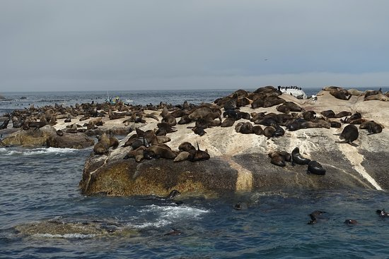 Private Sightseeing Trip to the Cape of Good Hope and Boulders Penguin Colony: Seal island.