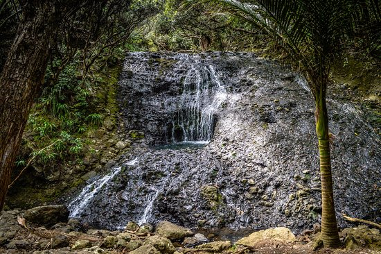 Full-Day Wild West Coast Photo and Discovery Tour including Lunch from Auckland: Falls