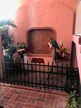 Parrots at the Inn