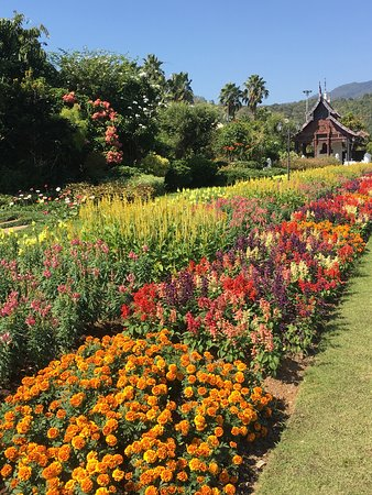 Chiang Mai Floral