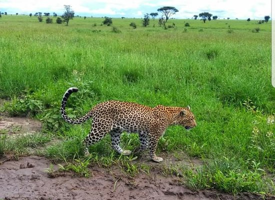 What a lucky day with leopard