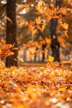 Her mevsimin rengi bir başka güzel🍁🍂  #bodrum #Midtown #ortanokta #ortakzevkler #bodrumunkalbi #bodrumda #sale #indirim #kampanya #alisveris #kıs #winter #christmas