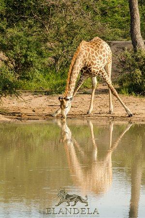 Elandela Reserve Safaris