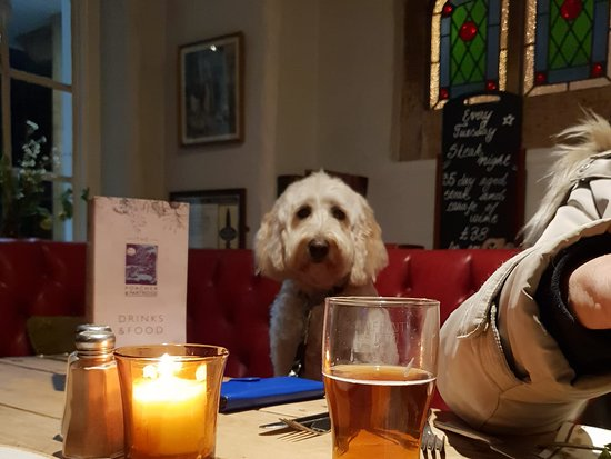 Dogs welcome in the bar