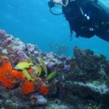 Florida dive Trip