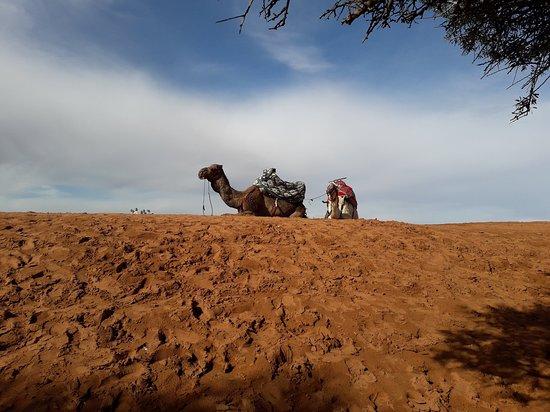 Petit Sahara