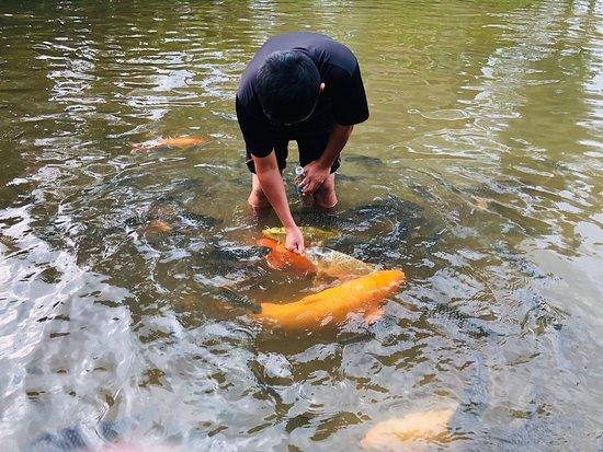 Bombon Kg. Marakau (Fish Spa)
