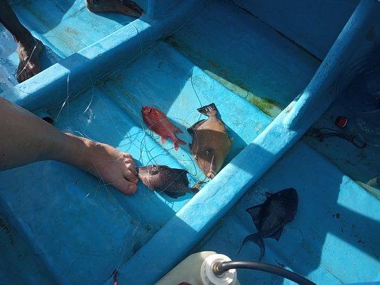Mirissa Deep Fishing Tours