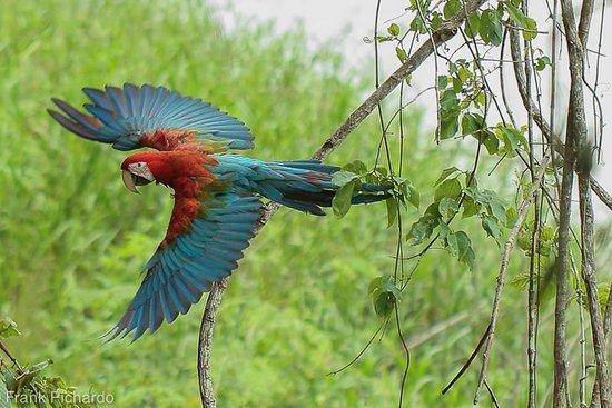 Paradise Amazon Tours