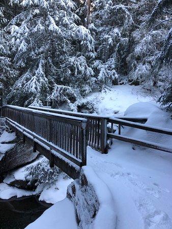 Bridge over Avalanche Creek