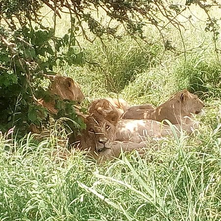 Tsavo National Park East, Kenya: Buongiorno amici di nome mi chiamo fortunato e sono guida turistica watamu per il safari ed escursioni contattami per più informazioni +254706337488 O facebook