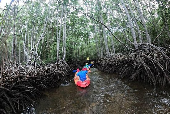 1 Hour Kayaking or Stand Up Paddle Adventure From Lembongan to The Mangrove: From Lembongan: Kayaking or Stand Up Paddle At The Mangrove