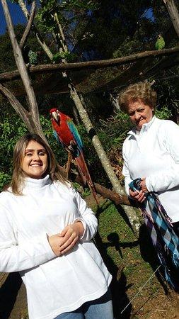 Entrada general al complejo GramadoZoo: os pássaros, ficam bem pertinho de nós!