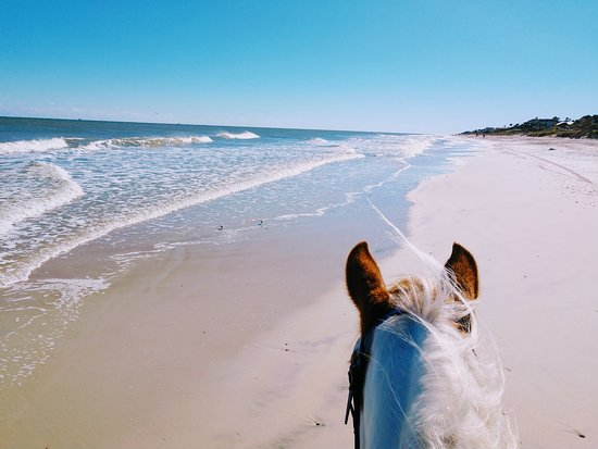 Gulf Coast Ponies