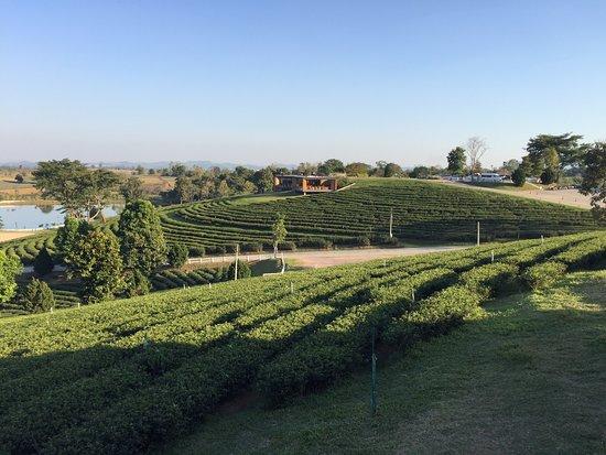 Choui Fong Tea Plantation