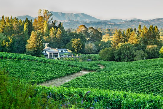 Sebastopol, CA: Lynmar Estate's Quail Hill Vineyard