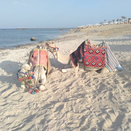 Marsa Alam, Mesir: Red sea and animals