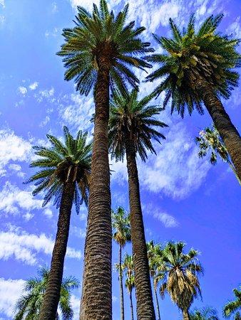 Árvores do parque