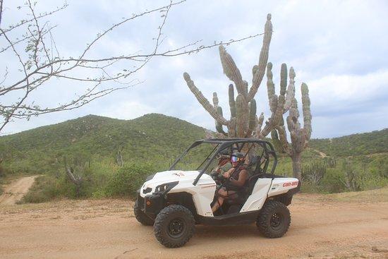 Candelaria Beach and Desert UTV Adventure: Look at that cactus!
