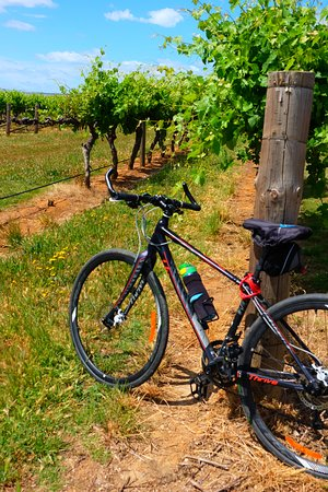 Surrounded by vineyards - bikes were a great way to explore