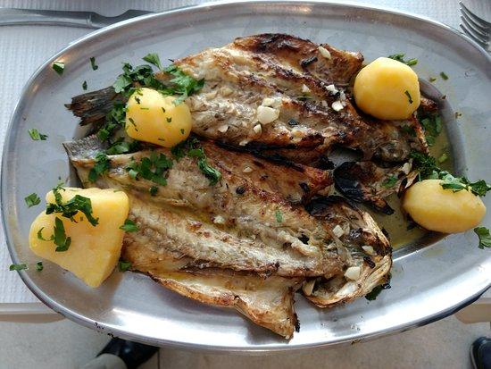 Peixe Escalado; Scaled Fish; Pescado Escalado;Poisson Ècaillé.
