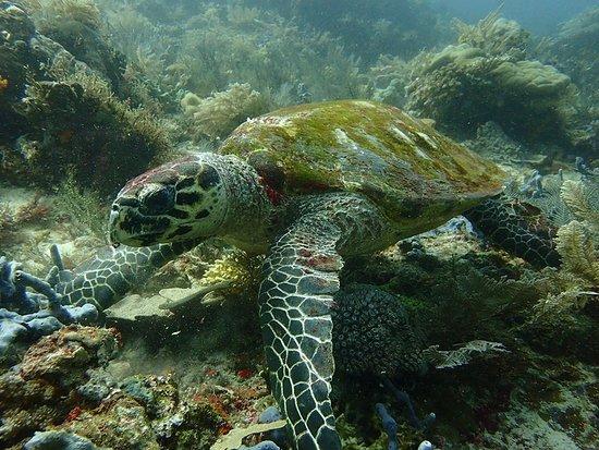 Labuan Bajo, Indonesia: Turtles