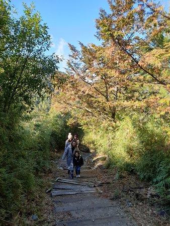 大雪山啞口觀景台步道