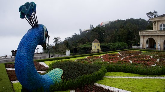 Private Tour To Explore Ba Na Hills With Golden Bridge In Both Hands: Peacock