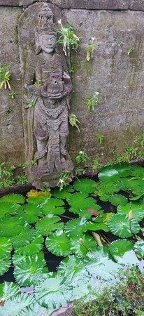 Beautiful grounds & Lotus pond