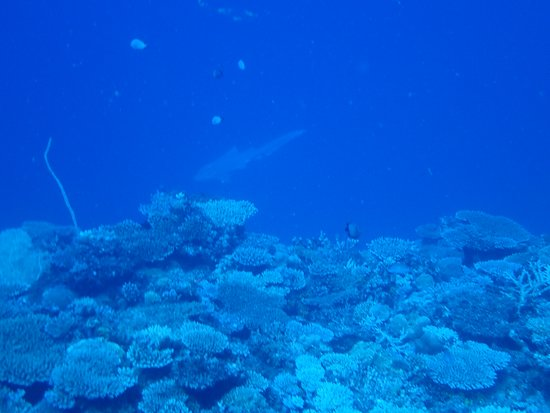 Nosy Tan probable and Nosy Sakatia - Snorkeling and diving tours: requin léopard