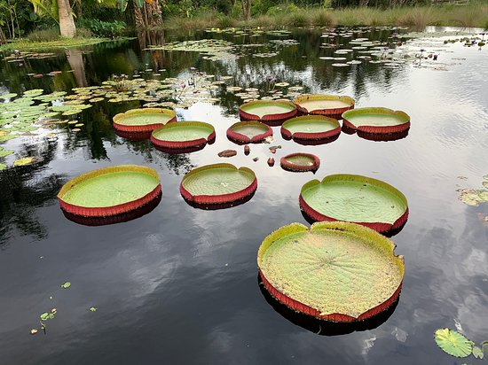 So many different lily pads