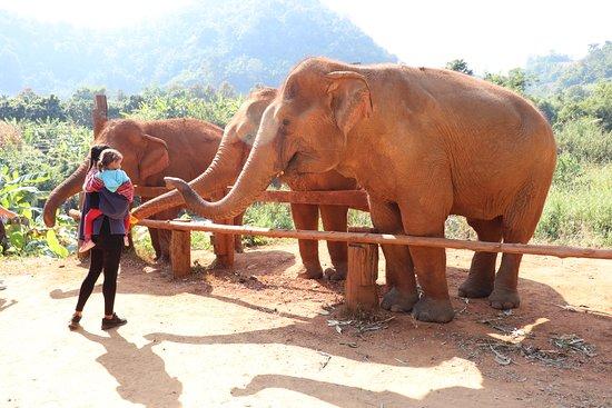 2.5year old feeding elephants.