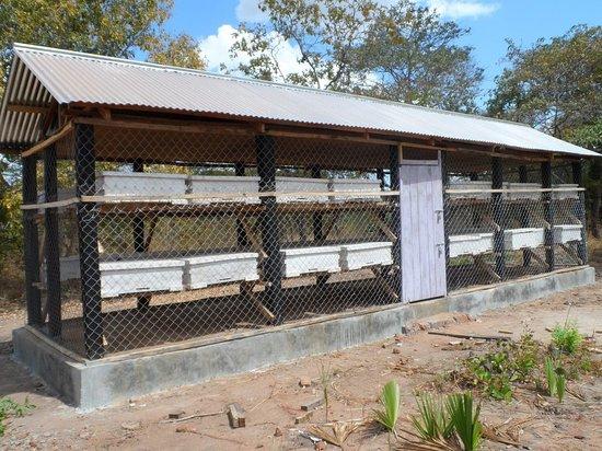 Tabora, Tanzania: Local Bee Cage at Usinge Village