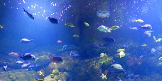 Valencia, İspanya: pesci